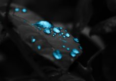 Black Leaves Blue Drops 4K Wallpaper