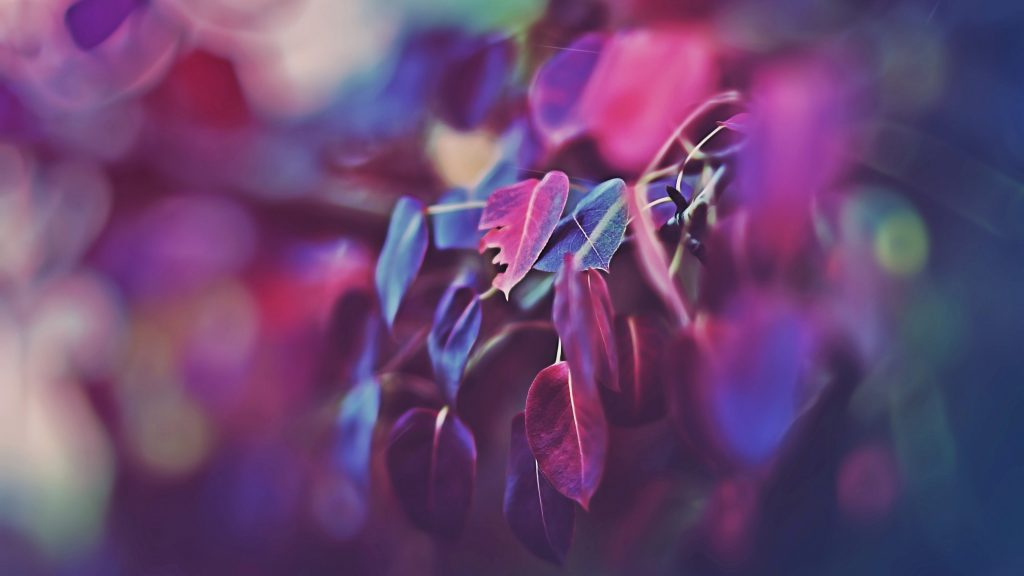 Leaves Colorful Purple Blue Bokeh 4K Wallpaper