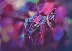 Leaves Colorful Purple Blue Bokeh 4K Wallpaper