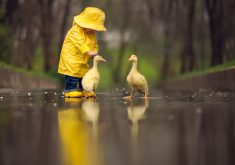 Little Boy Child Playing With Ducks 4K Wallpaper