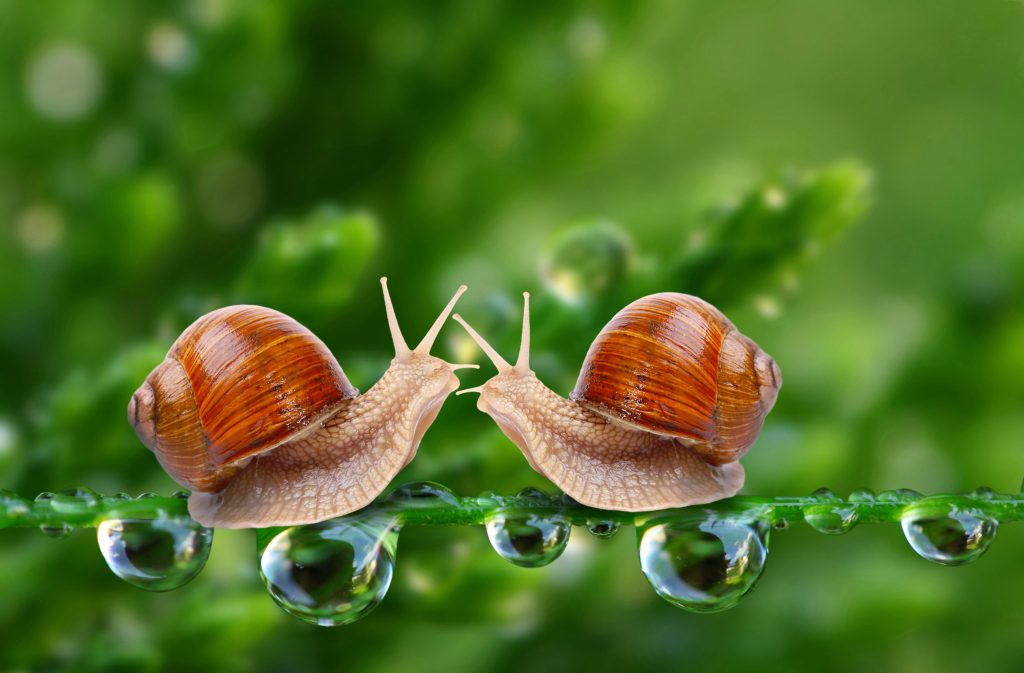 Snail Animal Waterdrops Green 5K Wallpaper