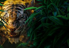 The Jungle Book Shere Khan Movie 5K Wallpaper