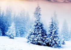 Trees Snow Winter Blue White 8K Wallpaper