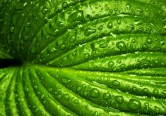Wet Leaf Macro Waterdrops Drops 5K Wallpaper