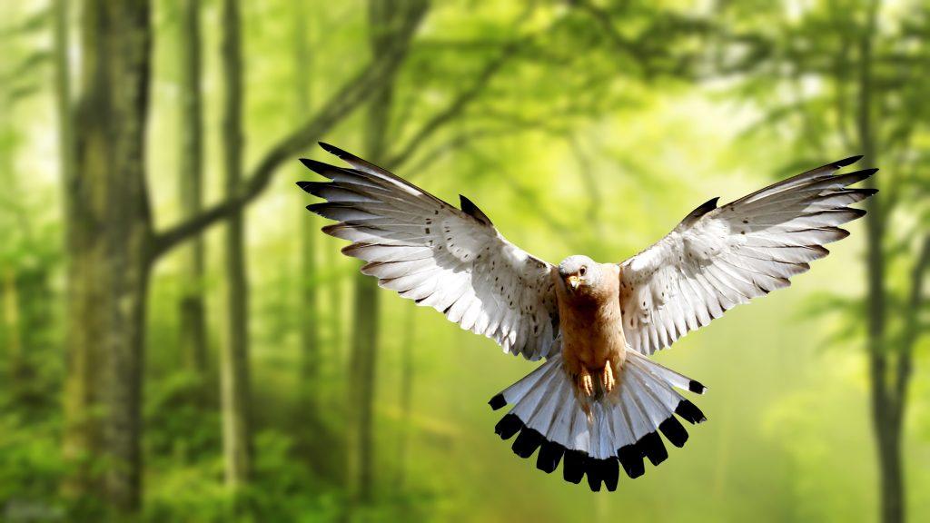 Eagle Bird Forest Green Trees 4K Wallpaper