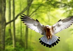 Eagle Bird Forest Green Trees 4K Wallpaper