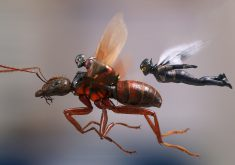 Ant-Man and the Wasp Ant-Man Wasp Flying Poster 4K Wallpaper