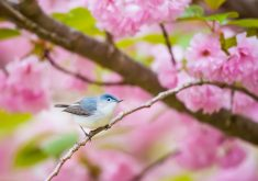 Blue Bird Pink Flowers 4K Wallpaper