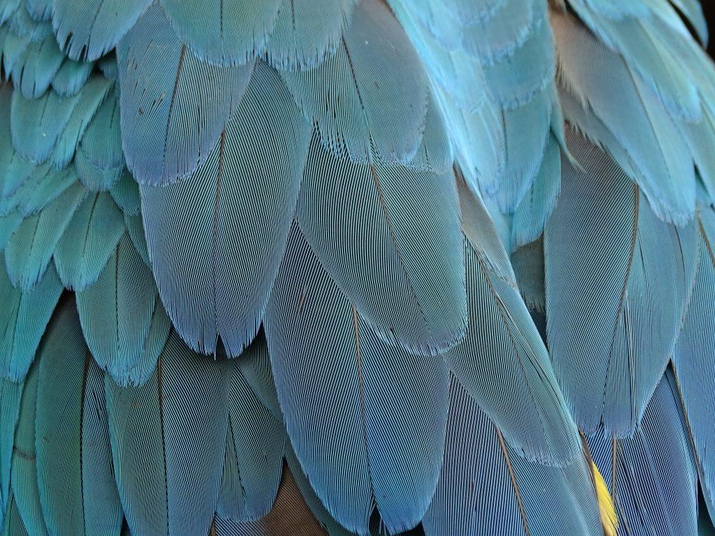 Blue Birds Feather 5K Wallpaper