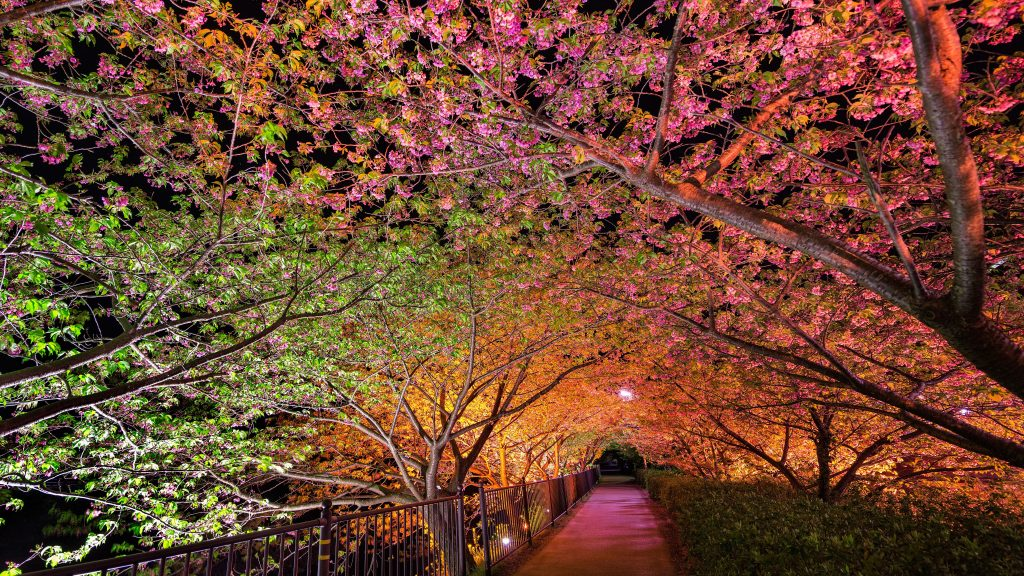 Colorful Trees Tunnel 5K Wallpaper