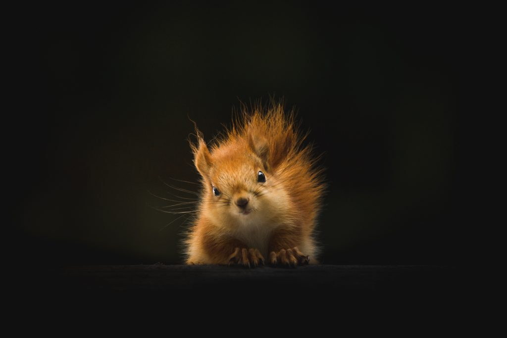 Cute Orange Squirrel 5K Wallpaper