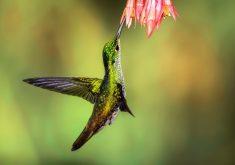 Green Hummingbird 5K Wallpaper