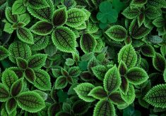 Green Leaves Pattern 5K Wallpaper