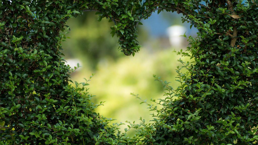 Green Tree Heart Background 5K Wallpaper