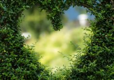 Green Tree Heart Background 5K Wallpaper