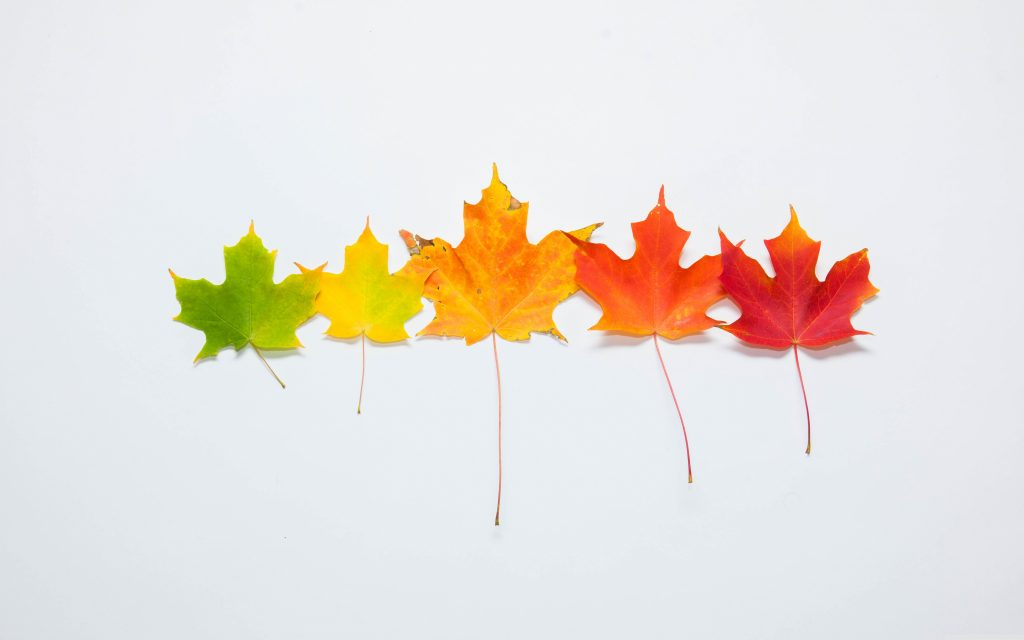 Seasonal Leaves 5K Wallpaper