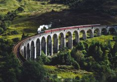 Train Railway Bridge Forest Green 4K Wallpaper