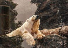White Bear Rocks 5K Wallpaper
