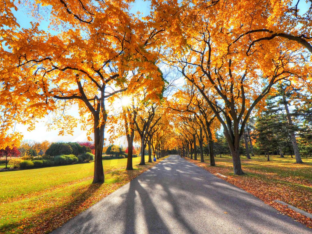 Autumn Trees Road Nature 4k Wallpaper Best Wallpapers