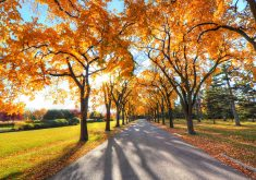 Autumn Trees Road Nature 4K Wallpaper