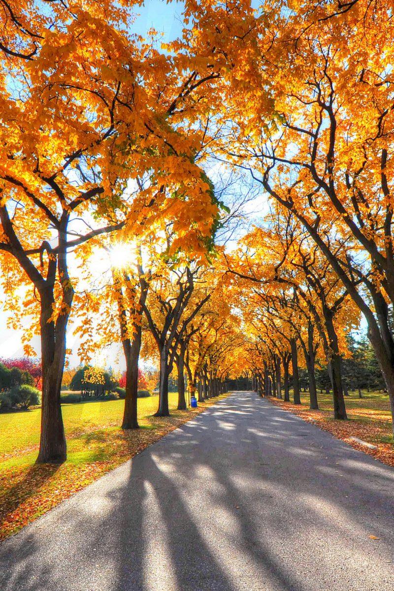 Autumn Trees Road Nature 4K Wallpaper - Best Wallpapers