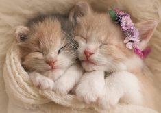 Cute Cats Pets 5K Wallpaper