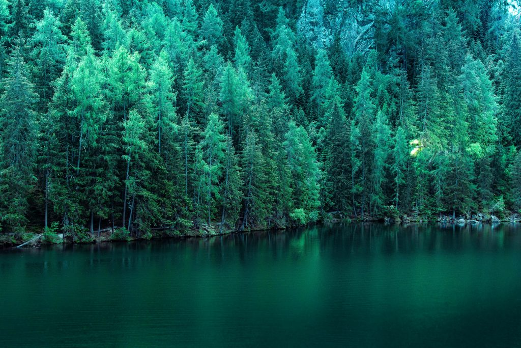 Green Trees Along Lake 5K Wallpaper