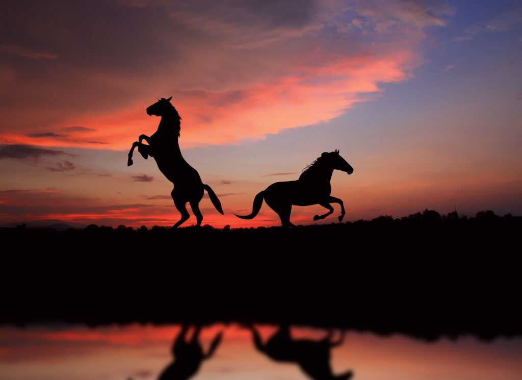 Horses Sunset Animals 5K Wallpaper