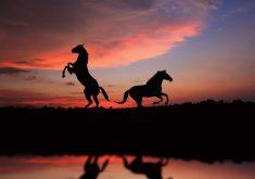 Horses Sunset Animals 5K Wallpaper
