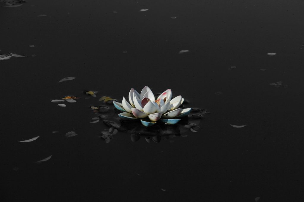 Lotus Flower Black Mud 5K Wallpaper