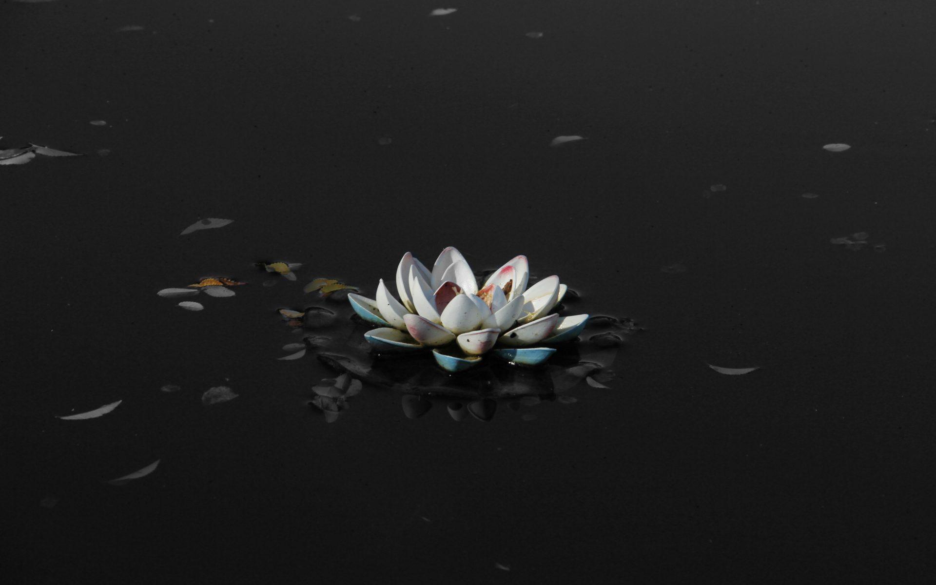 Lotus Flower Black Mud 5K Wallpaper - Best Wallpapers
