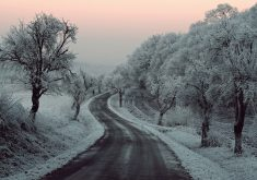 Winter Road Snow Frozen Trees 5K Wallpaper