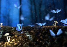 Butterflies Trees Fantasy Blue 4K Wallpaper
