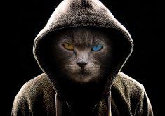 Cat Hoodie Eyes 4K Wallpaper