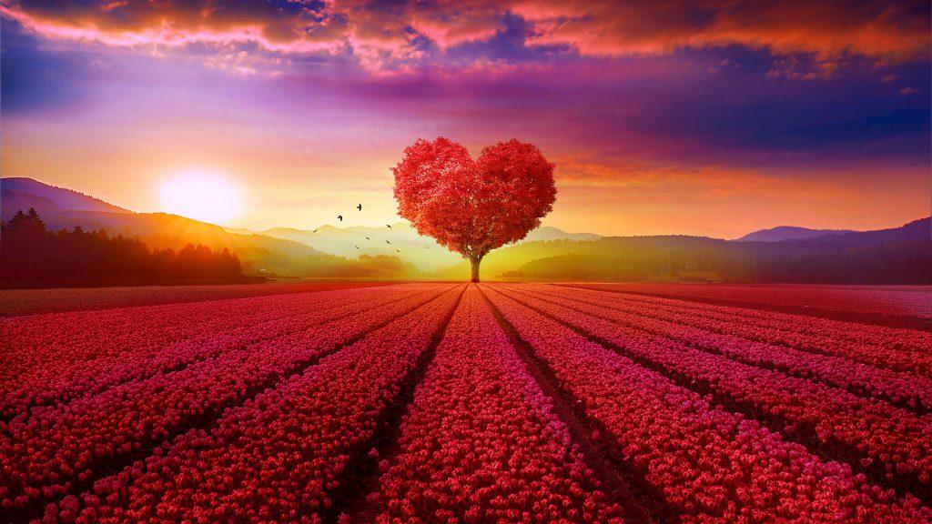 Heart Tree Love Sunset Dusk Red 4K Wallpaper