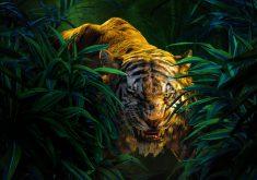 Shere Khan Tiger Mowgli 4K Wallpaper