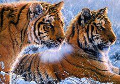 Tigers Animal Wildlife Wild 4K Wallpaper